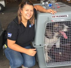 taking dogs to El Salvador