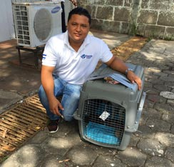 moving pets to Nicaragua
