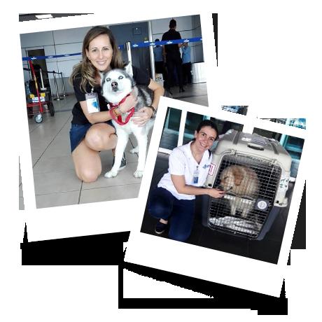 Pets at airport