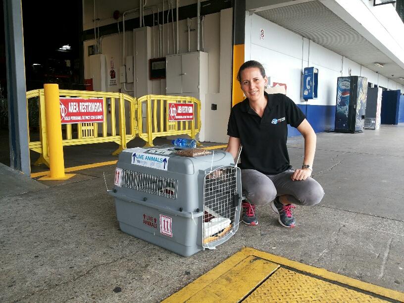 Pet transport, pet travel, pet shipping, pet relocation