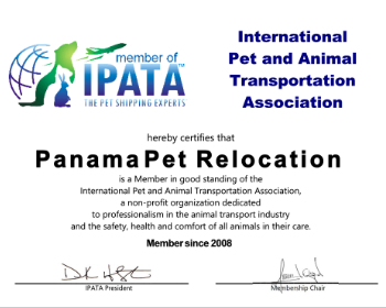 Member of IPATA