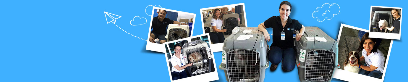 Worldwide pet relocation