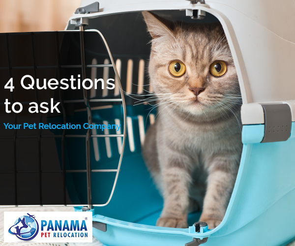 4 Questions to Ask Before Hiring a Pet Relocation Company