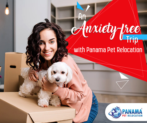 Engaging Pet Relocation Services Means an Anxiety-free Trip