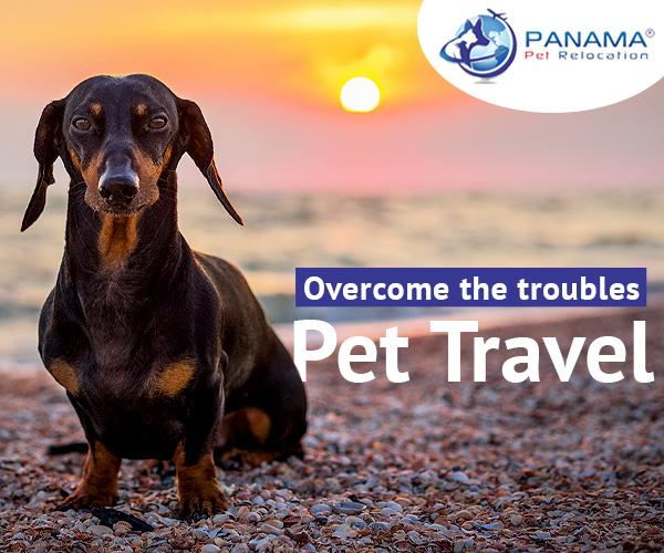 bringing pets to panama