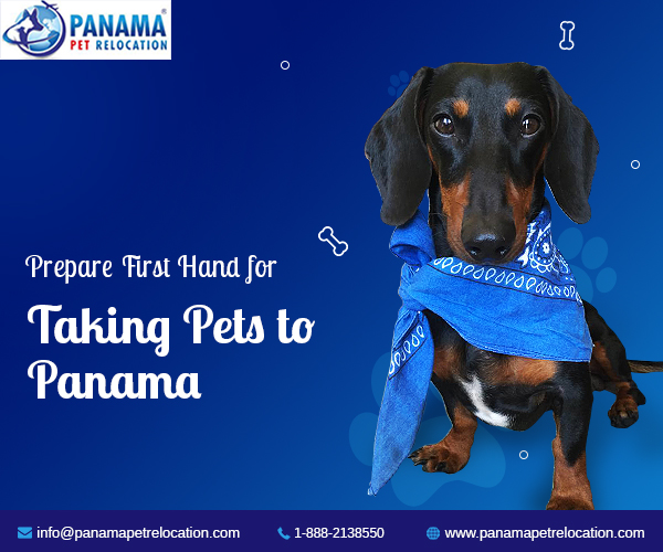 Taking pets to Panama
