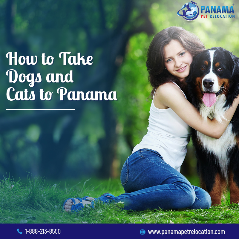 take dogs and cats to Panama