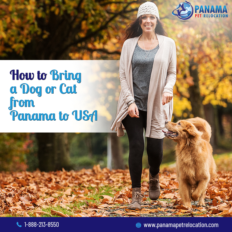 bring a dog or cat from Panama to USA