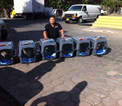 Pet Relocation in Nicaragua