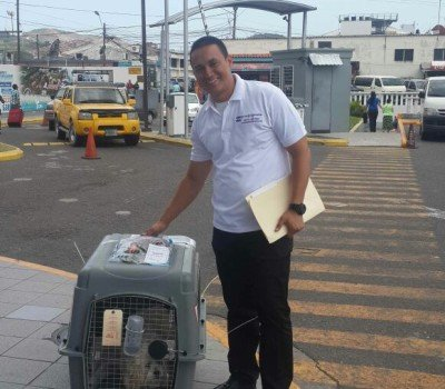 Pet Relocation in Honduras